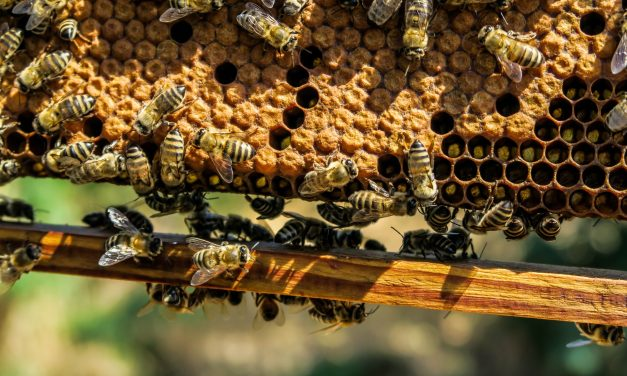 Oozing With Controversy | The Honey Debate – Vegan or Not Vegan?