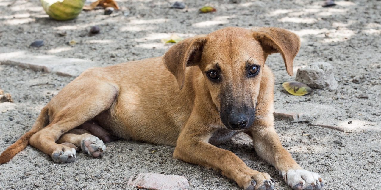 Warning to Travellers – You Might Actually Be Eating Dog Meat
