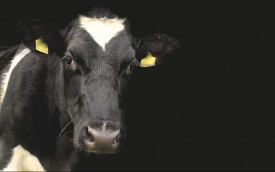 5 Facts to Explain The Newly Approved 'Humane Milk is a Myth' Advert