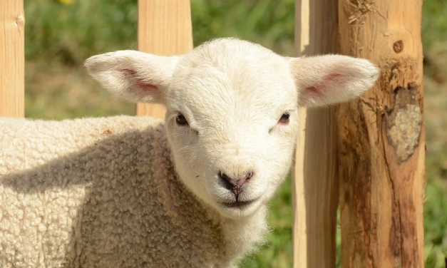 NZ Introduce 46 New Regulations To Protect Animals Against Human Cruelty