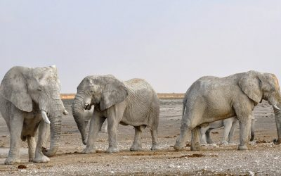 The Earth's 'Sixth Mass Extinction' Is Imminent. What Can We Do To Stop It?