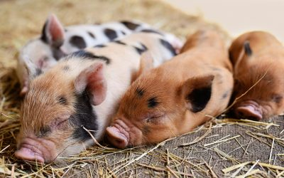"""What's """"Speciesism"""" And Why Should You Join The World's Biggest March Against It?"""