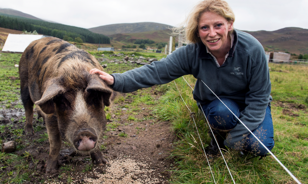 Is it Possible to be a Vegetarian and a Pig Farmer?