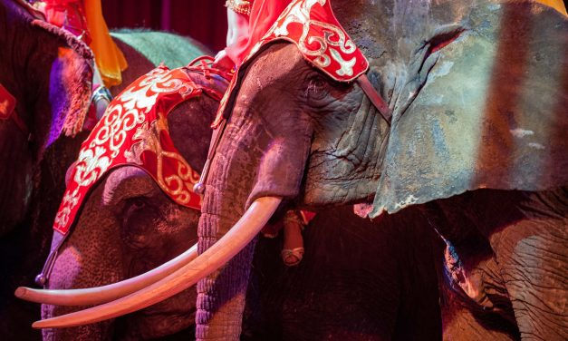 Italy to Save 2000 Animals by Implementing Ban on Circus Animals