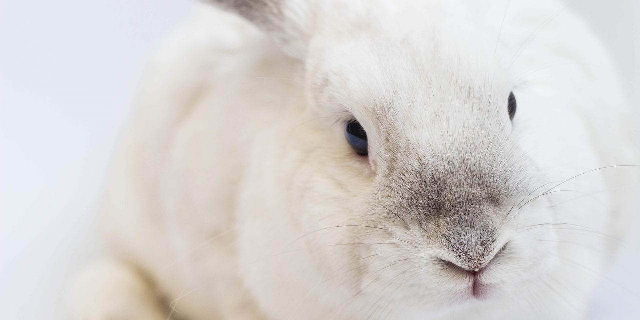 Cruelty-Free Bill Could See End of Cosmetics Animal Testing in Canada