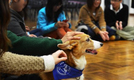 Animal Welfare Module Introduced in Schools Across China