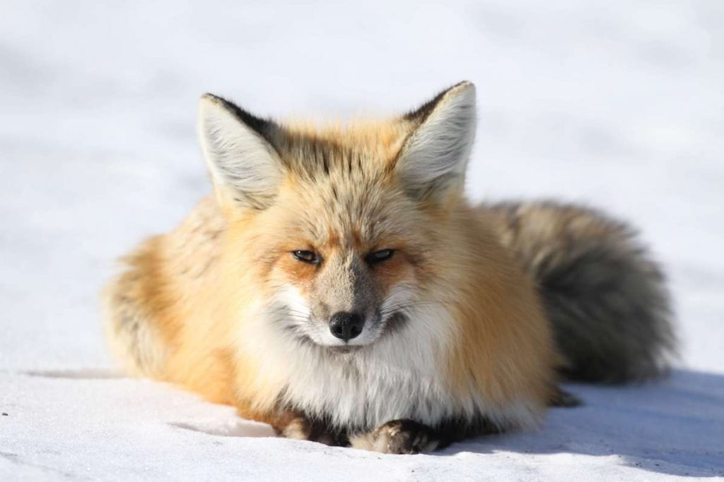 San Francisco Officially Bans the Sale Of Fur