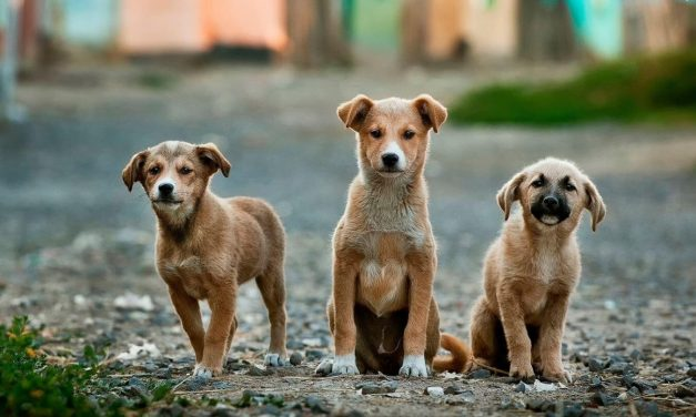Indonesian City Commits to Ban Dog and Cat Meat Trade