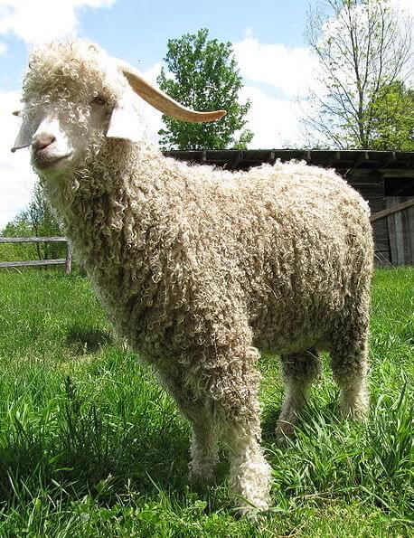The Royal Collection Trust Will Stop Selling Mohair